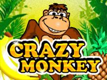 Демо игра Crazy Monkey